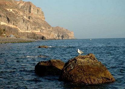 Imagen de La Punta de La Aldea con una gaviota en un primer plano.