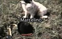 "Cine Amateur: ""Marcelino"" (1974)"