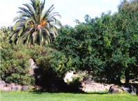 """Jardín Canario """"Viera y Clavijo"""""""