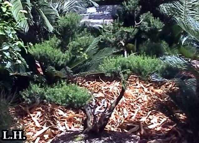"Jardín Botánico y ""FloraBrígida"" (2ª Parte)"