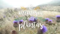 La Memoria de las Plantas
