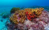 V. Mar de Canarias