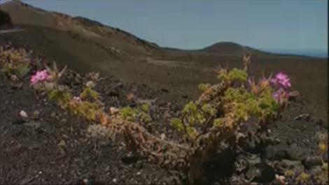 Parque Nacional de Timanfaya Lanzarote ( y 3ª Parte )